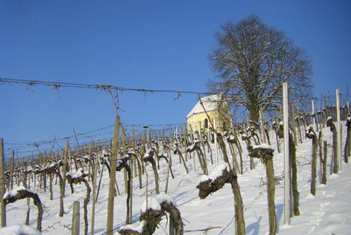 Muenzerkapelle und Weingarten