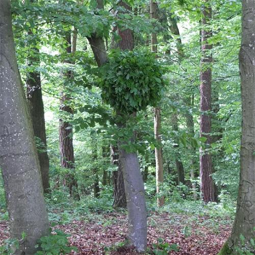 Landart in Hatzendorf