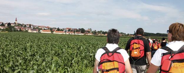 Wandern entlang von Krenfeldern am Vitalweg Kirchberg und am Krenweg Mettersdorf