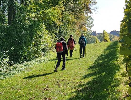 Sprehod po geološki poti in dvorec Kapfenstein